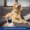 Vigie seu pet em tempo real pelo aplicativo!